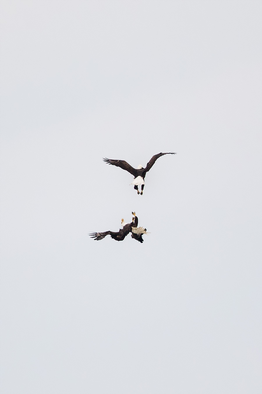An epic air battle from control of LBI habitat ensued