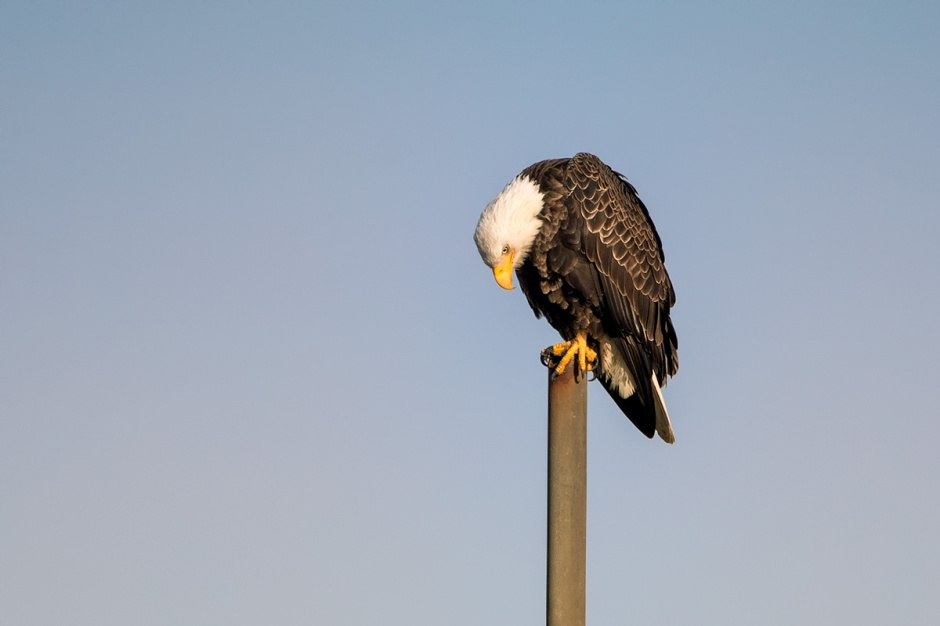 """Iz mah pole."" :