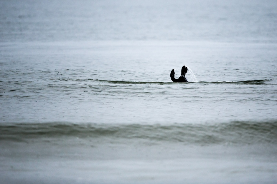 So many Seals are frolicking in the nearshore waters, we even got Seal Bitz!