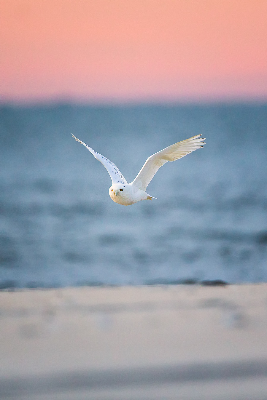 He took off like an Owl Out Of Heck across the beach...