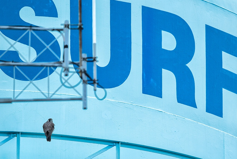 Surf PEFA