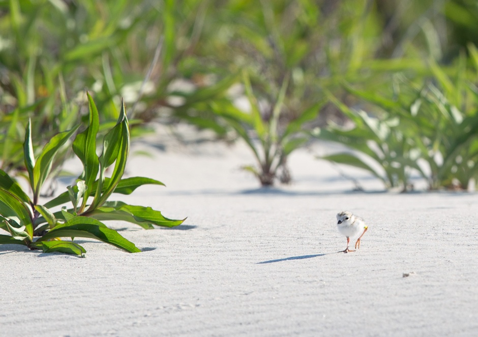It had not been unusual to find Joe exploring the beaches of LBI far, far away from her family.