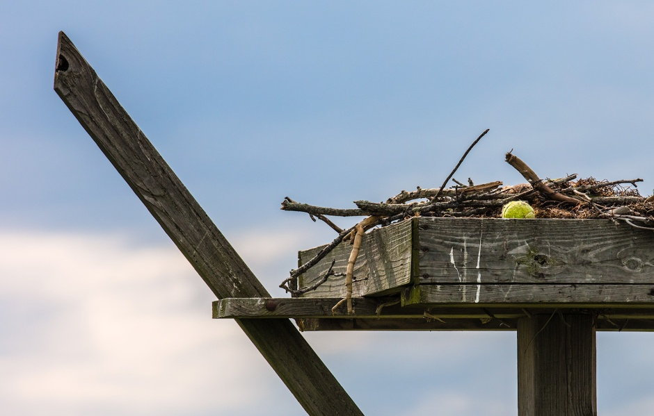 This nest managed to retain its Tennis Ball. I would have loved to see the Osprey hauling that ball back to the nest.