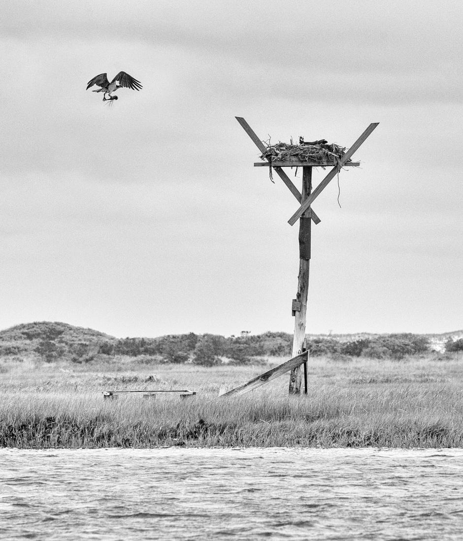 Fallen Osprey Couple