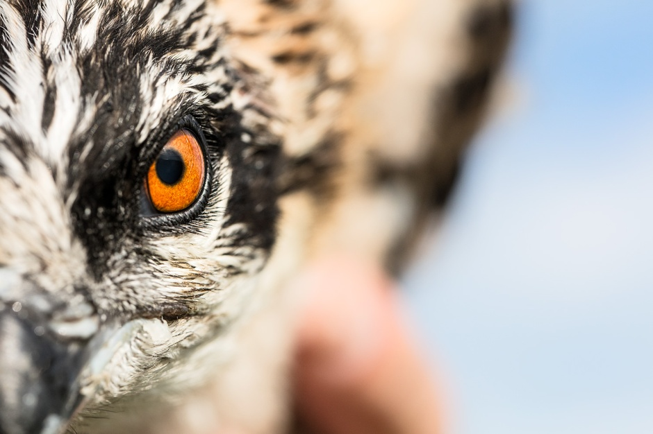 And as you're about to find out, you're a bunch of very special little Osprey as you'll be part of Project Red Band.