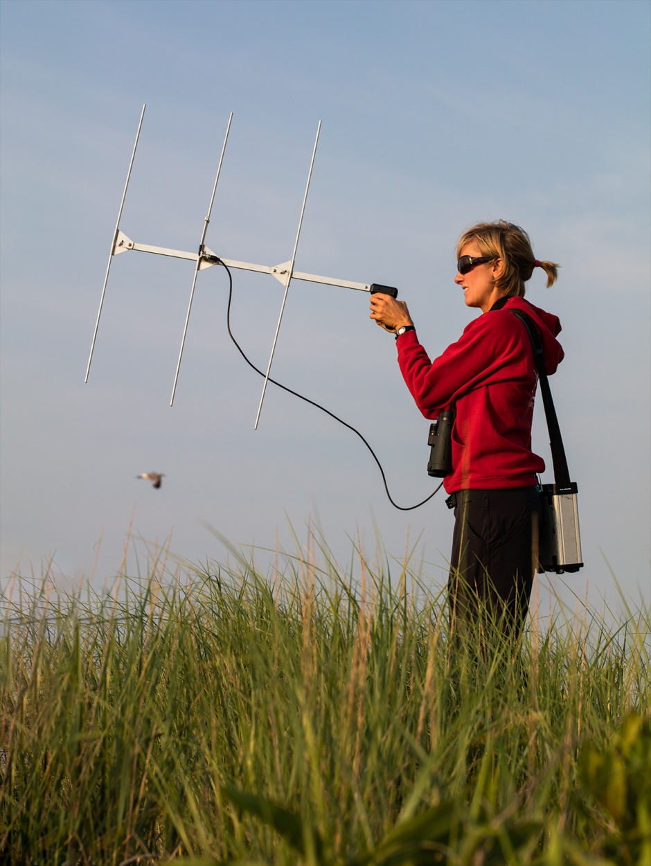 Michelle hunts for Tufters radio unit at Barnegat Light State Park.