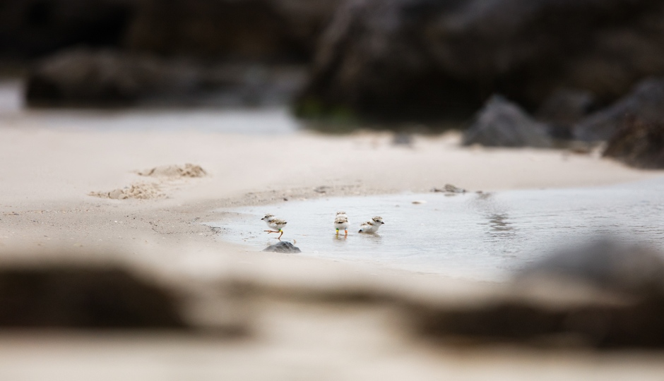 Bonus Shot: Baby Bath! The Three Itty Bitties discover there is more to the Beach than just Sun & Sand.