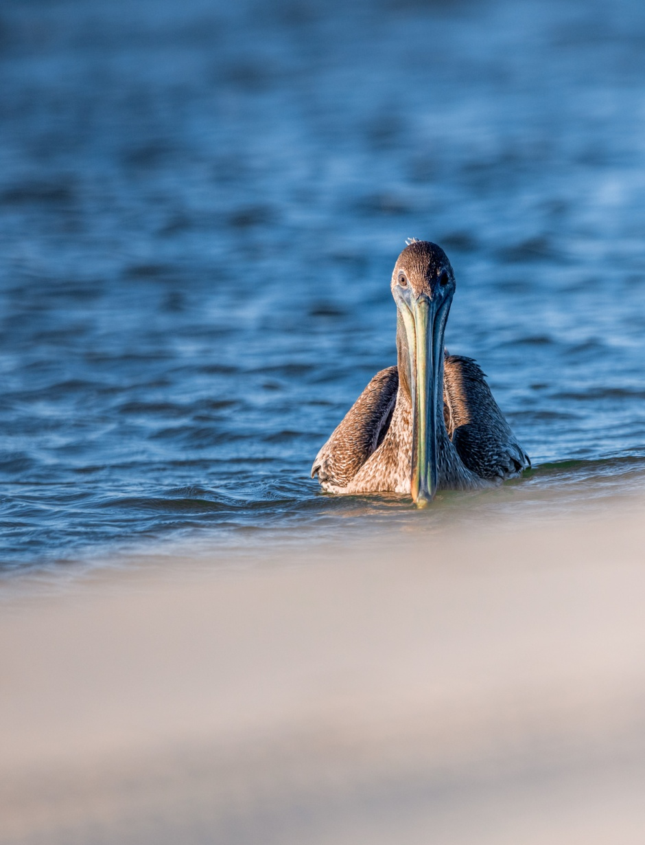 Apparently, this Pelican is happy to see you.