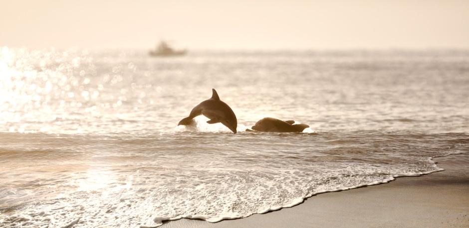 Dolphin Outback. Not Dolphin Outback... Dolphin Out Back.