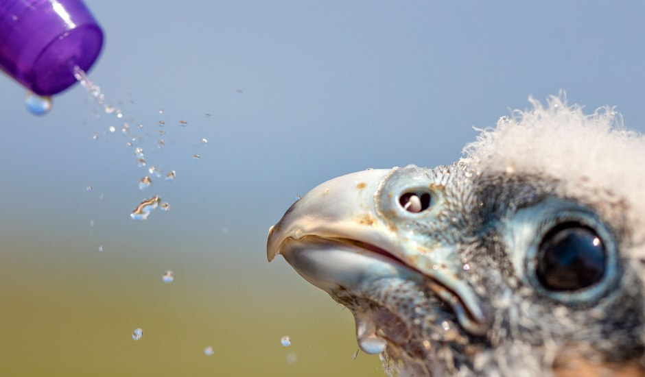 peregrine-fresh-water-drink
