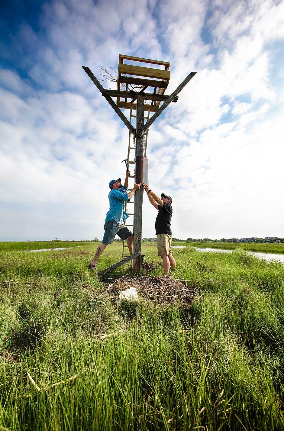 repairing-osprey-nest-fallen-x