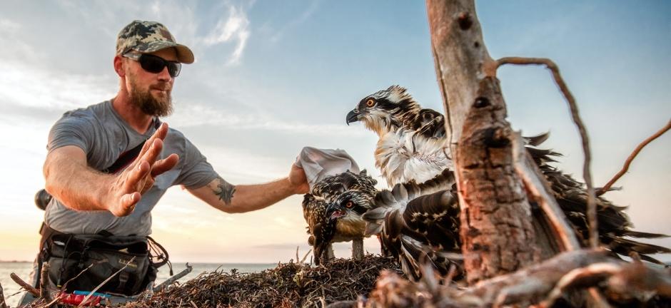osprey-whisperer