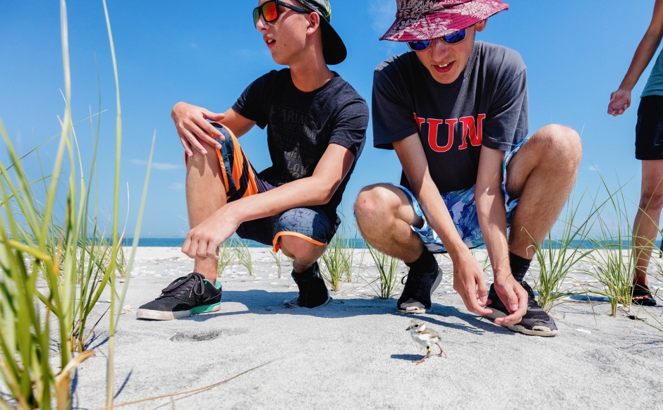 piping-plover-chick-release-bad-biys