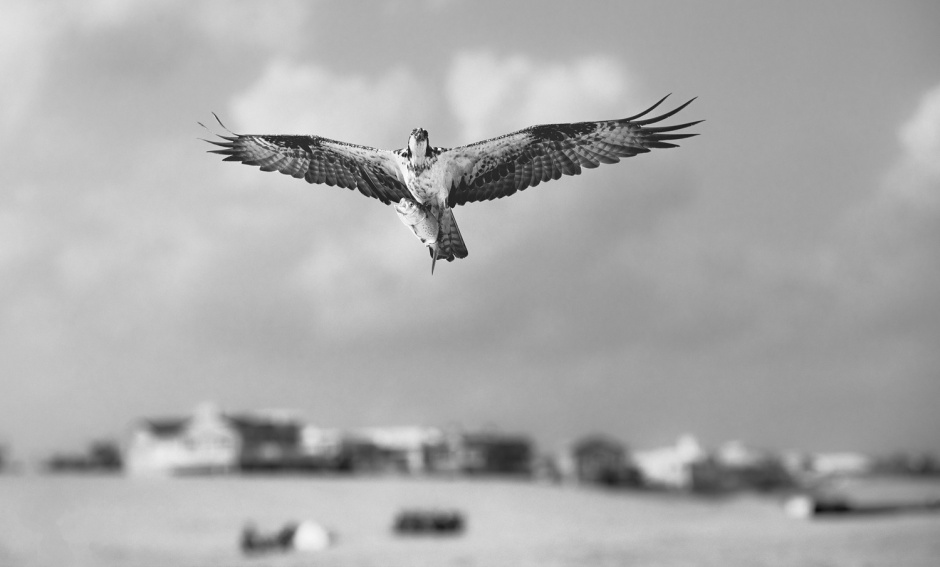 osprey-fish-beach