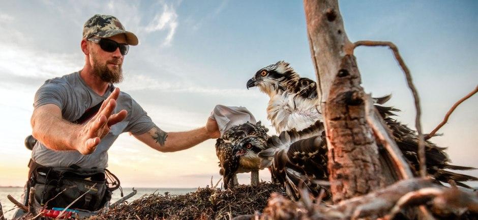 ben-wurst-osprey-whisperer