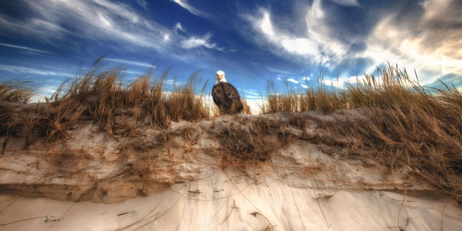 dune-buddy-eagle