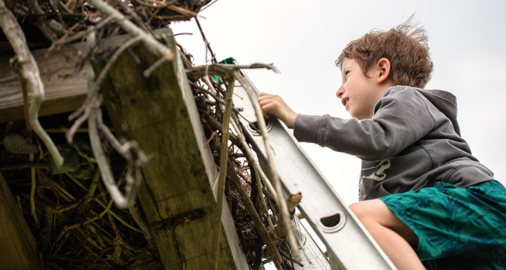child-at-osprey-nest