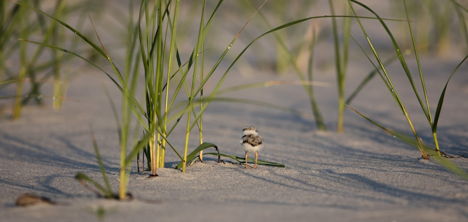 flapjack-in-the-dune