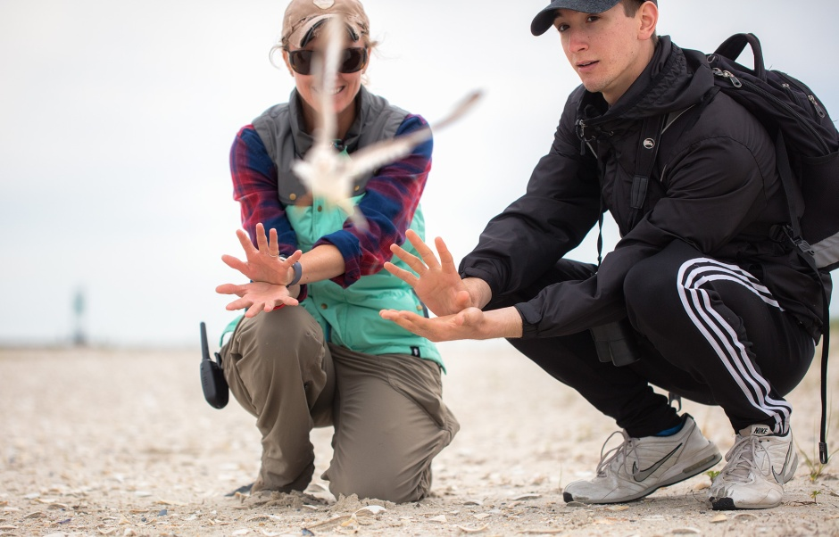 josh-piping-plover-release