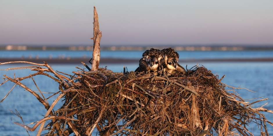 lbi-natural-nest-babies