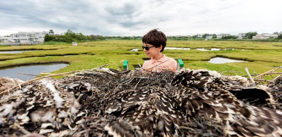 shades-n-osprey