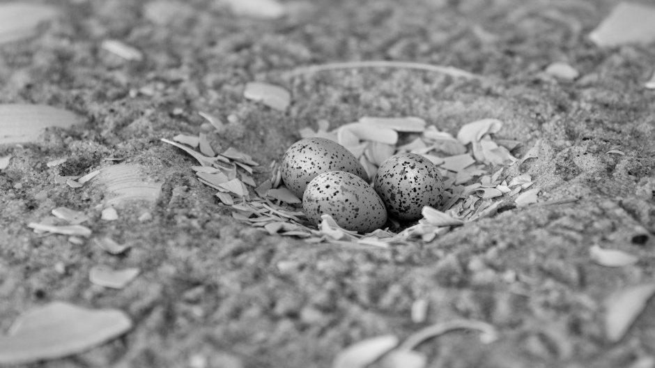 smalls-nest