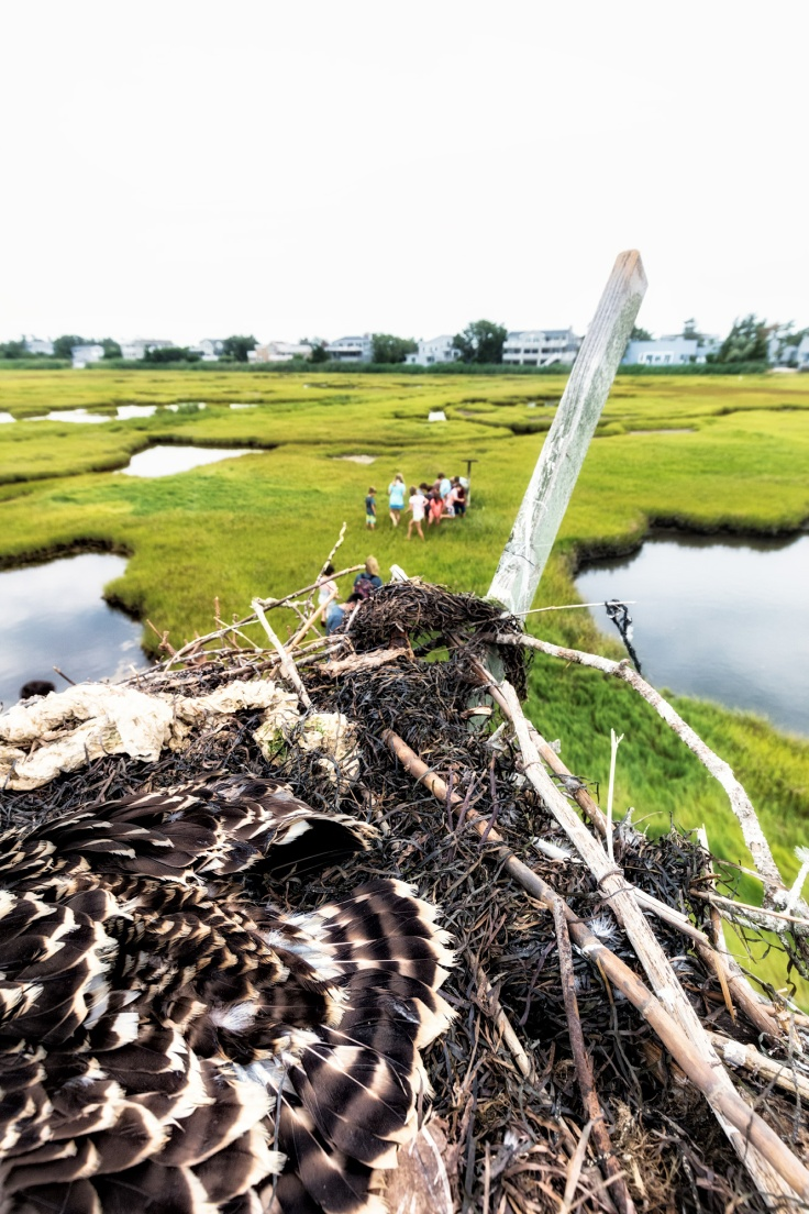 view-from-the-osprey-nest