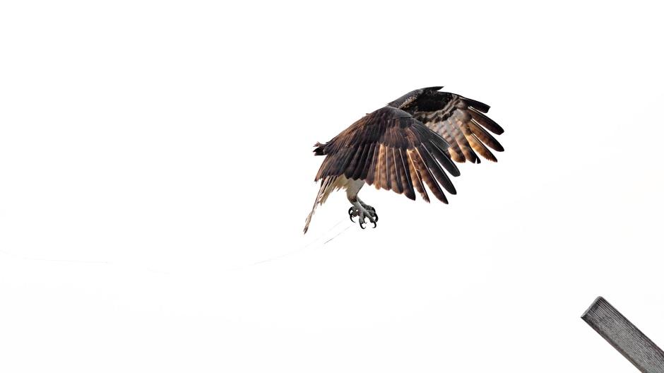 wendy-landing-