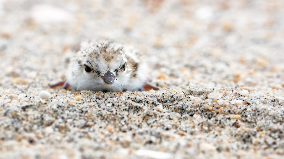 sand-eye