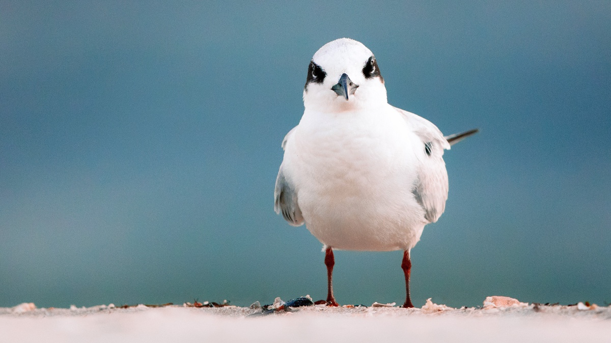 Tern Down For What?