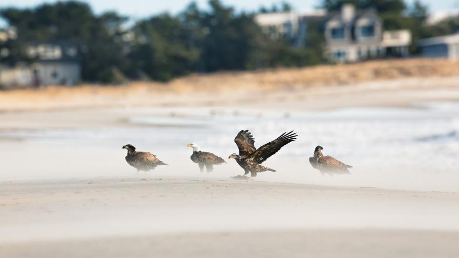 four-eagle-lineup-awesome